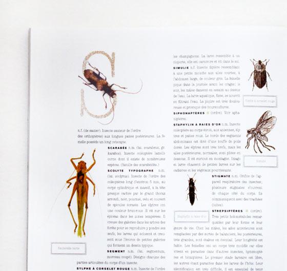 Maquette dictionnaire des insectes. © Florence Boudet