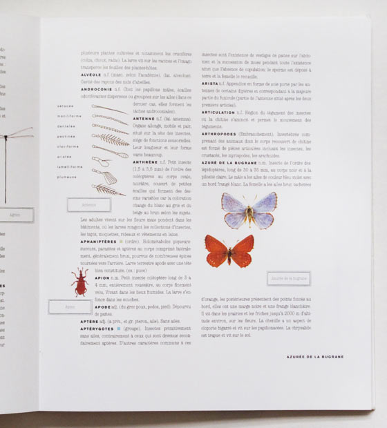 FLO-FLO - Florence Boudet - book - book design - insects - dictionary - typography - butterfly - illustrated - repertoire - entry - classification