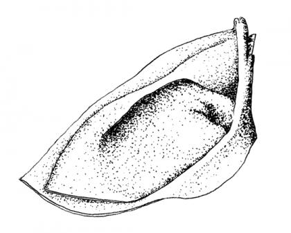 dessin de cappelletto au rotring. © Florence Boudet