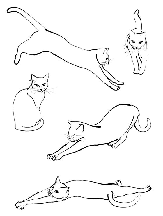 Lo zen del gatto, de Ludovica Scarpa, ensemble des illustrations à l'encre de chine. © Florence Boudet