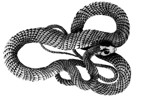 Serpent, illustration lavis et plume encre de chine. © Florence Boudet