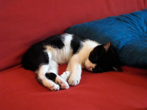 delta chaton noir et blanc