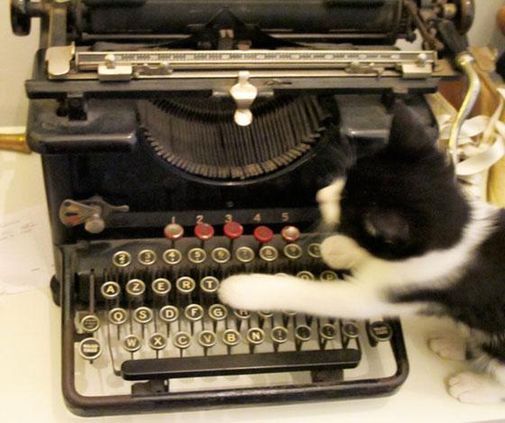 delta chaton noir et blanc aveec machine à écrire remington